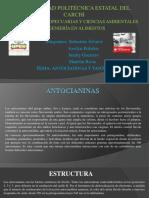 Antocianinas y Taninos Exposición