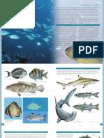 023mafi.pdf