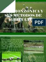 Armando Nerio Guedez Rodríguez - Asia Monzónica y Sus Métodos de Agricultura
