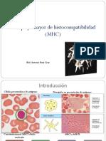 Complejo Principal de Histocompatibilidad (MHC)