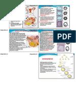 Embrio Diapos Arf