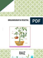 Biologia Vegetal 2 Organos