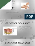 Diapositivas de La Piel