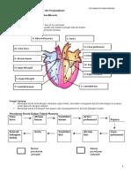 Sistem Peredaran Darah Manusia Dan Pengangkutan