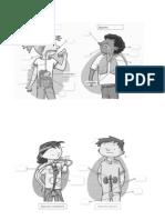Dibujos Aparato Digestivo y Respiratorio Circulatorio y Urinario