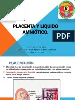 03-placenta_y_l-a