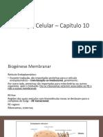 Biologia Celular – Aula 15
