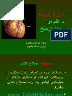 Heart Secrets Pashto