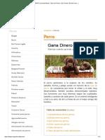 PERRO (Características, Tipos de Perros, Qué Comen, Dónde Viven..