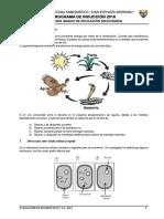 Prueba Diagnóstica Cta 2