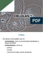 2 - A célula
