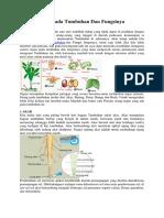 Sistem Organ Pada Tumbuhan Dan Fungsinya.docx
