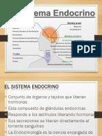 El Sistema Endocrinogfgh