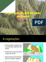 Vegetação Do Rio Grande Do Norte_prof. Bajan