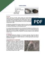 concha_negra.pdf