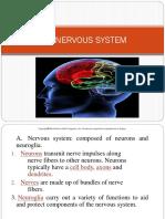 Nervous System 30Aug