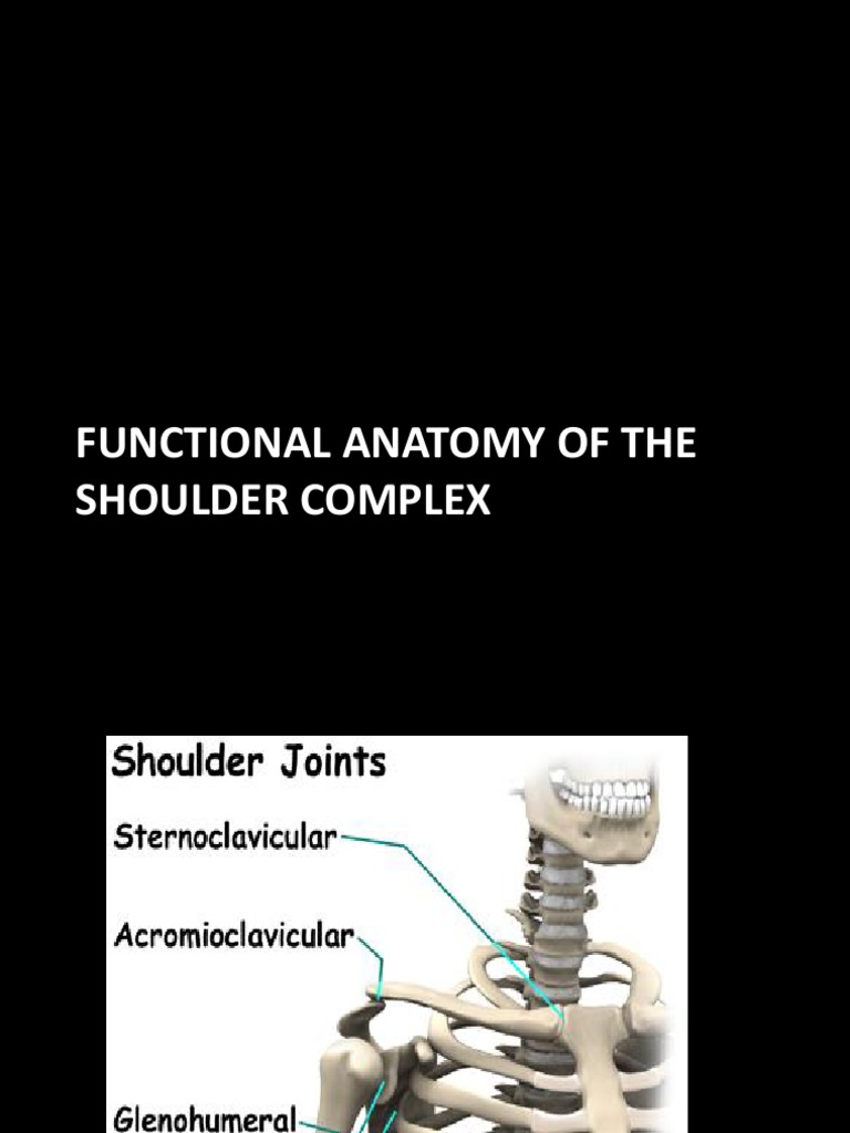 Functional Anatomy-upper Exremity | Shoulder | Anatomical Terms Of ...