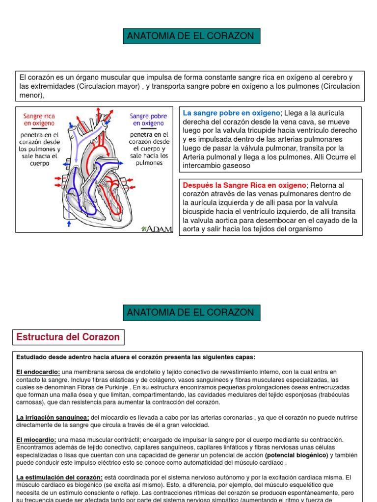 Anatomia patologica. Insuficiencia Cardiaca