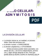 Ciclo Celular, ADN y Mitosis