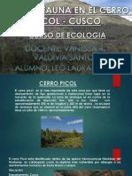 Flora y Fauna - Cerro Picol