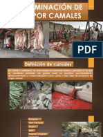 Contaminacion de Aguas Por Camales