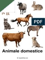 imagini.-categorii.pdf