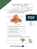 Reprodução Plantas 6º