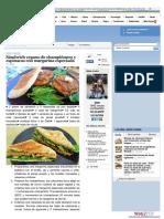 Sandwich Vegano de Champiñones y Espinacas