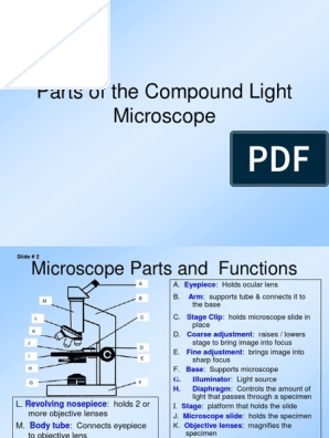 Parts Of The Compound Light Microscope Lens Optics Optical Devices