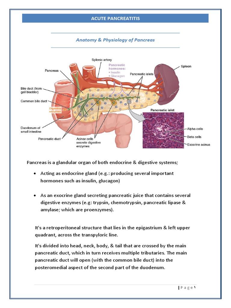 03. Pancreatitis | Pancreas | Human Digestive System
