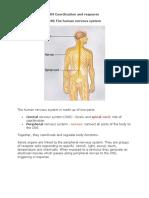 09 Coordination Biology Notes IGCSE 2014