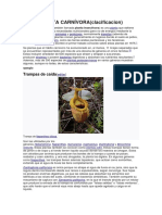 Planta Carnívora(Clasificacion)