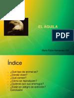 Trabajo_Águilass