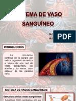Sistema de Vaso Sanguineo