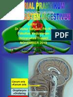 Tutorial Model Sistem Digestivus 1 2013