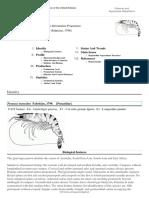 FAO Fisheries & Aquaculture - Cultured Aquatic Species Information Programme - Penaeus Monodon (Fabricius, 1798)