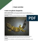 Guia Fases de Gecko Leopardo