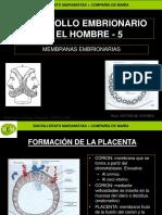 desarrollo-embrionario-humano-5-mcm.ppt