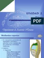 miología Tórax