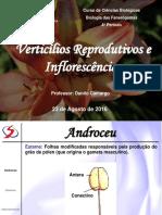 Fan05 - Inflorescência