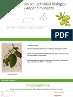 Compuestos Con Actividad Biológica en Annona Muricata