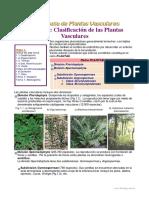Clasificacion de Las Plantas Vasculares