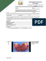 Relatório AE _Dissecação Do Coração de Um Mamífero