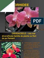 orhidee.ppt