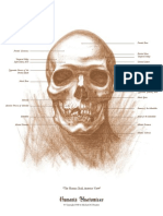 The Human Skull, Anterior View