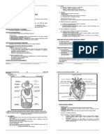 Sistema Circulatorio Teoria