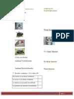 actividadesvertebrados-101127143809-phpapp02