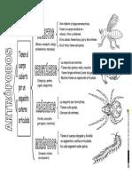 Animales Invertebrados Clasificación Artrópodos