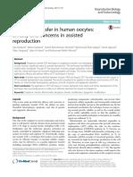 Ooplasmic transfer in human oocytes