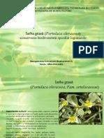 Portulaca Oleraceea
